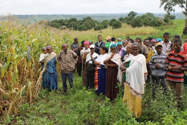 Gemiddelde opbrengst aan maïs per kubieke meter water in zes partnerlanden |